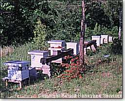 nucs and hives in the beeyard
